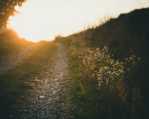 light path